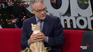 Edmonton Humane Society: Galump and Apollo