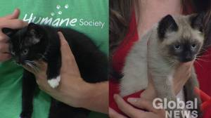 Calgary Humane Society Pet of the Week: Cinnamon & Henrietta
