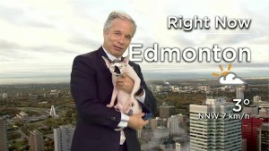 Gizmo the sphynx cat joins Mike Sobel's weather segment