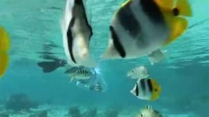Warming oceans reducing sea life
