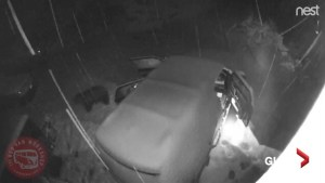 Curious Colorado bear opens snow-covered van doors and  leaves them open during winter storm