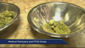 Can PTSD be Treated with Cannabis?