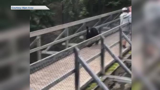 Visitors have scary close encounter with bear on bridge in Jasper