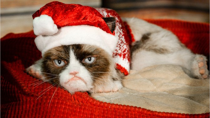 Grumpy Cat, the feline internet legend, dies at age 7
