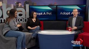 Adoptable pets with Second Chance Animal Rescue Society