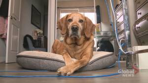 Pickering condo management evicts sick dog due to weight