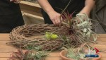 Gardenworks: Air plant wreaths