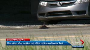 Pedestrian hit and killed by semi-trailer on Stoney Trail
