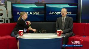 Adoptable Pets with Second Chance Animal Rescue