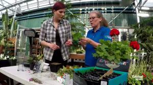 Get Gardening: Taking plant cuttings