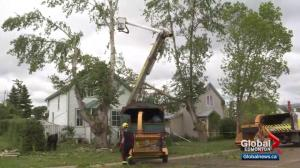 Wind takes its toll on trees in Edmonton area