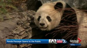 Panda Passage officially open at the Calgary Zoo