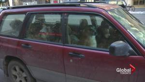 Dog walker bites back against claims pets abandoned in cold car