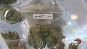 Lethbridge city council postpones community meeting on cannabis