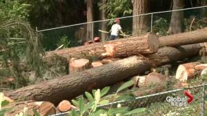 West Vancouverites fight to save trees