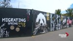 Calgary Zoo brings on team of experts in preparation for giant pandas