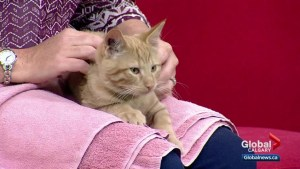 Calgary Humane Society Pet of the Week: Ashen