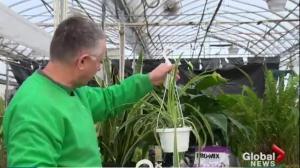 Garden Tips: transplants