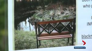 Memorial bench disappears from Edmonton ravine; family heartbroken