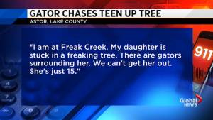 Dramatic 911 calls released after alligator chases Florida girl up a tree
