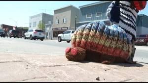 Bancroft gets yarn bombed on World Turtle Day (01:59)
