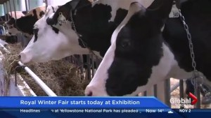 The Royal Winter Fair is Back!