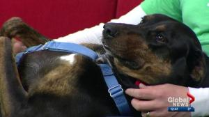 Pet of the Week: Dexter