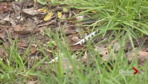 Discovery of over 50 needles on Vernon school property 'disgusting and disheartening'