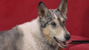 Helping seniors care for their aging dogs