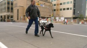 Regina man highlights the importance of guide dog etiquette
