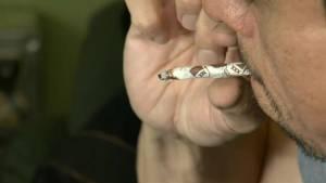 UBCO study shows marijuana helps mental health (02:26)