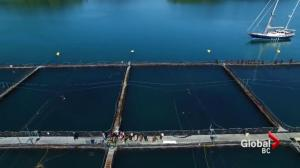 Controversial fish farm footage released