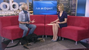 Ask an Expert – Dog Behaviour