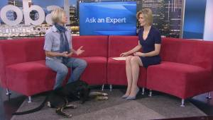 Ask an Expert – Dog Behaviour