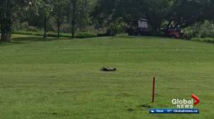 Alberta Fish and Wildlife investigate dead geese at golf course