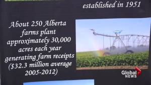 Sugar beet industry helping to drive southern Alberta's economy