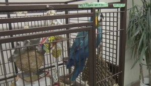 Vancouver exotic bird sanctuary needs a new home