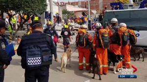 Edmonton canine rescue team helps search for survivors of Mexico earthquake