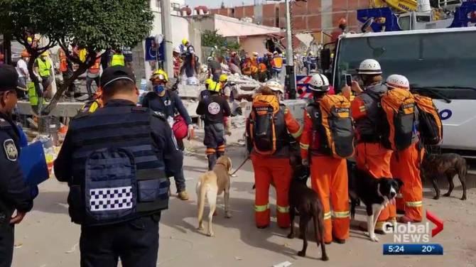 Canadiense de rescate de perros de búsqueda de ayuda para los sobrevivientes de México después de los terremotos - Globalnews.ca 1