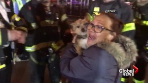 New York City firefighters rescue dog trapped in burning apartment building