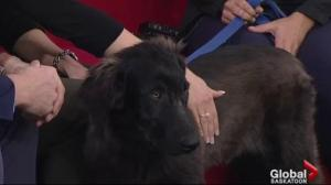 Adopt a Pet: Meet Blue, who is looking for his new home