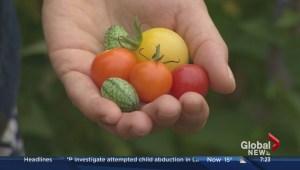 Gardening Expert Niki Jabbour