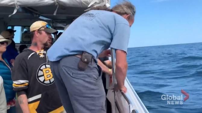 Whale-watching tourists witness humpback rescue off coast of Nova Scotia