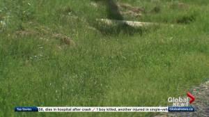 Edmonton pays for 2016 herbicide mistake
