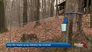 Sap is flowing again after slow start to maple syrup season