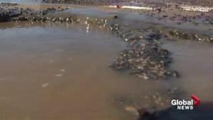 Calgary's big melt creates major pothole problem