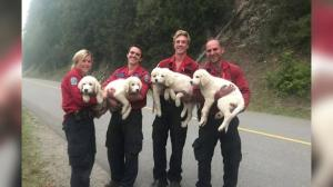Lost puppies found by B.C. fire crews