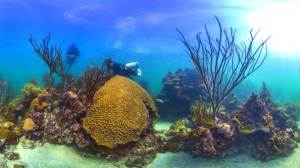 """How Google's """"Street View"""" is changing how we look at coral reefs"""
