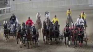 Renewed calls to ban chuckwagon races at Calgary Stampede after 6 horse deaths