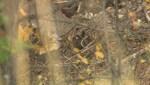 Salmon River Yankee Flats missing women
